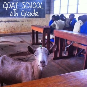 Goat school 4 Young Goats In Training front cover